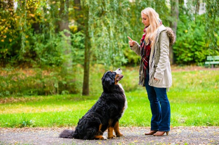 What Can You Expect From Dog Training?